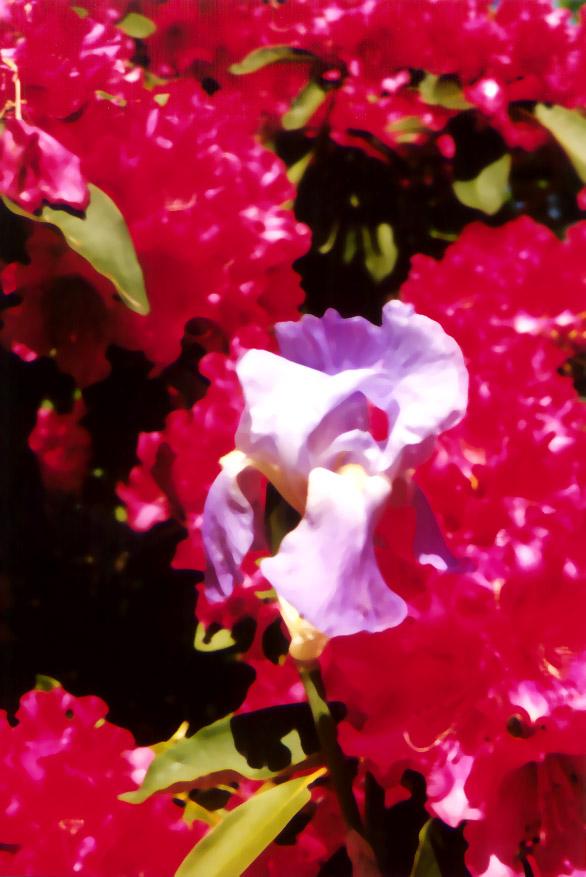 eugene_flowers1.jpg