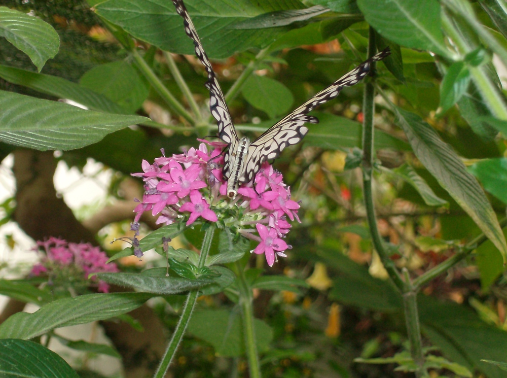 butterfly_hpim1336.jpg