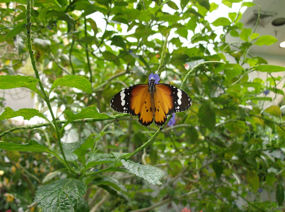 butterfly_hpim1349.jpg