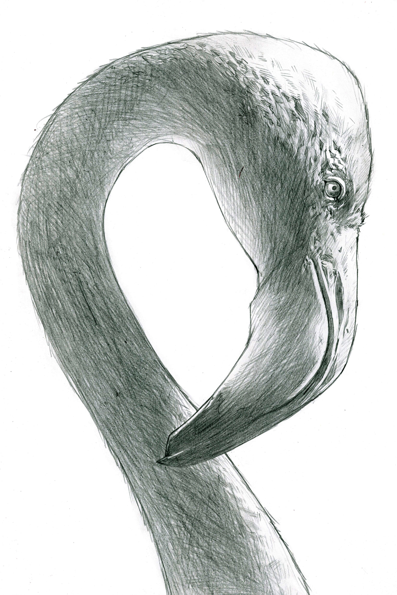 Graphite Flamingo.