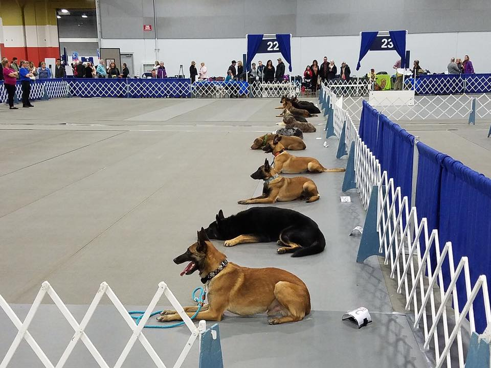 Team obedience at rose city dog show - we took second place!