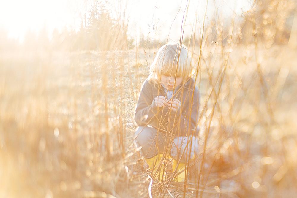 golden_hour_grasses.jpg