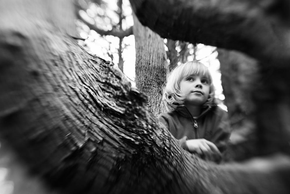 boys-branches-15.jpg