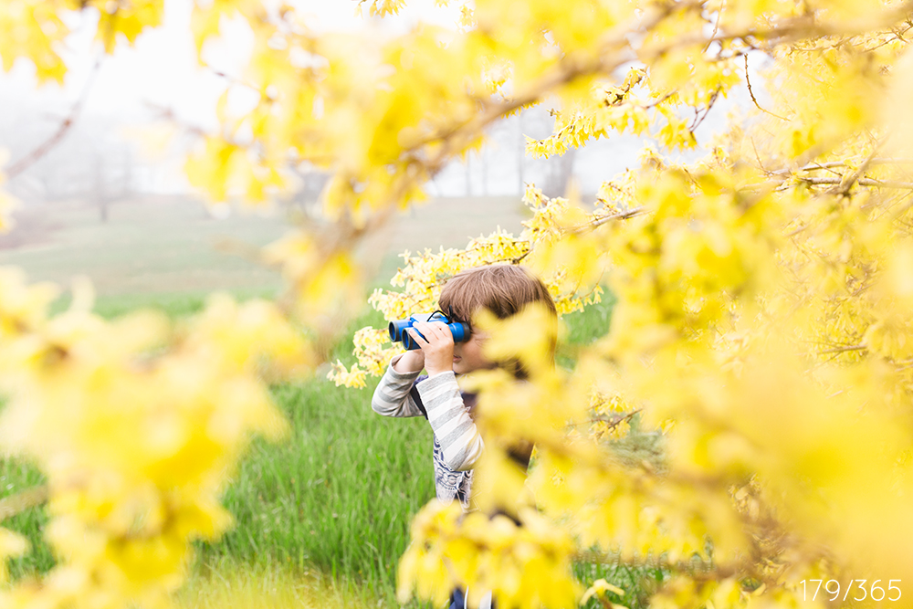 In the forsythia with your binoculars watching the field, looking for birds.