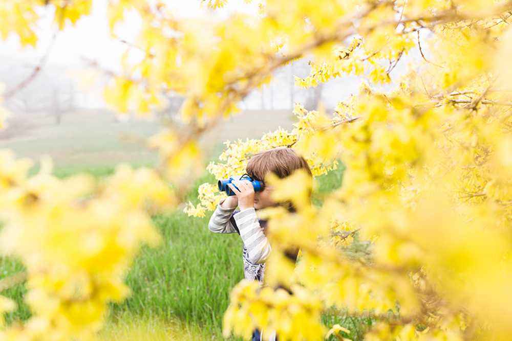 boys_branches_finn_forsythia_color-.jpg
