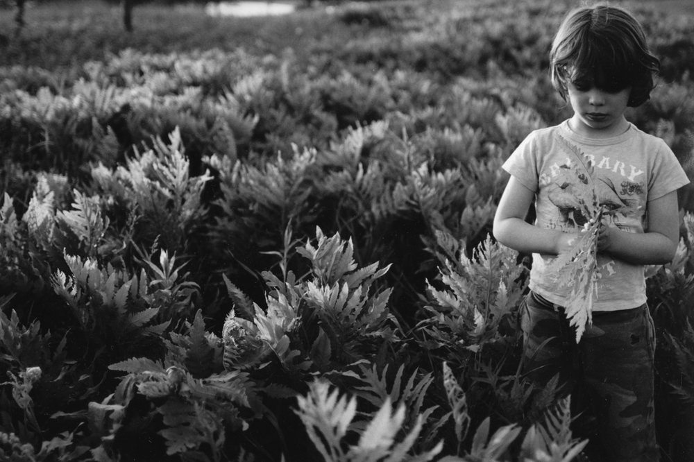 32/366 Darkroom | Silver Gelatin | Finn in Ferns
