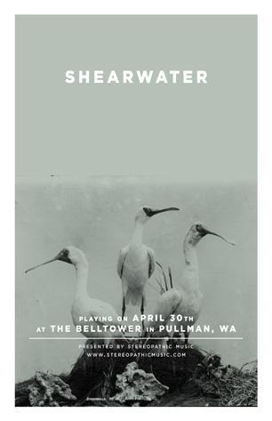 shearwater-2.jpg