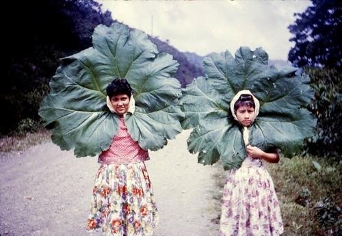 love plants, love life.jpg