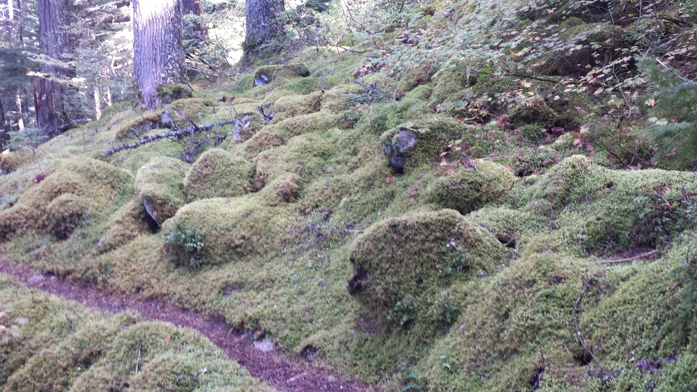 Moss makes everything look comfortable, doesn't it?