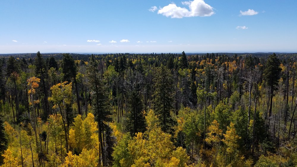 From the North Rim fire tower