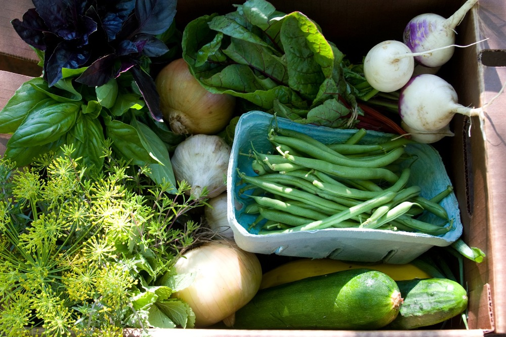 csa box closeup.jpg