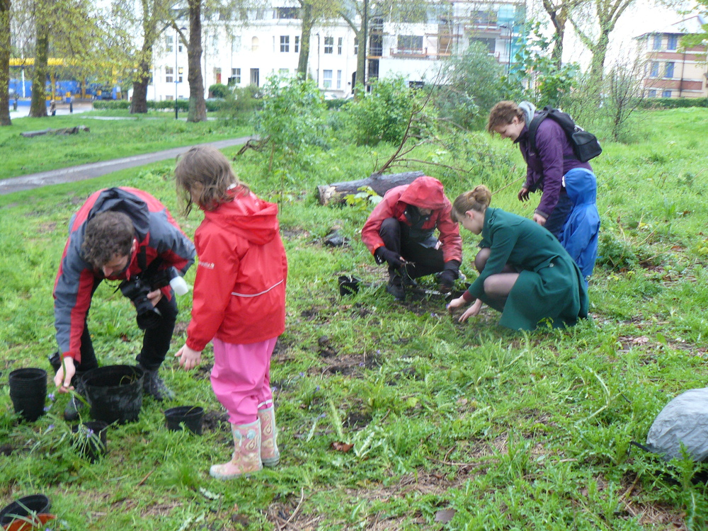 Urban Bluebells community planting