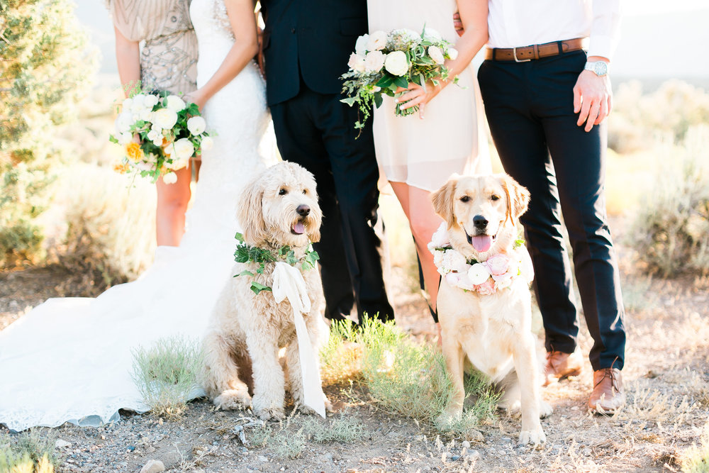 Dogs at wedding in garland collars.