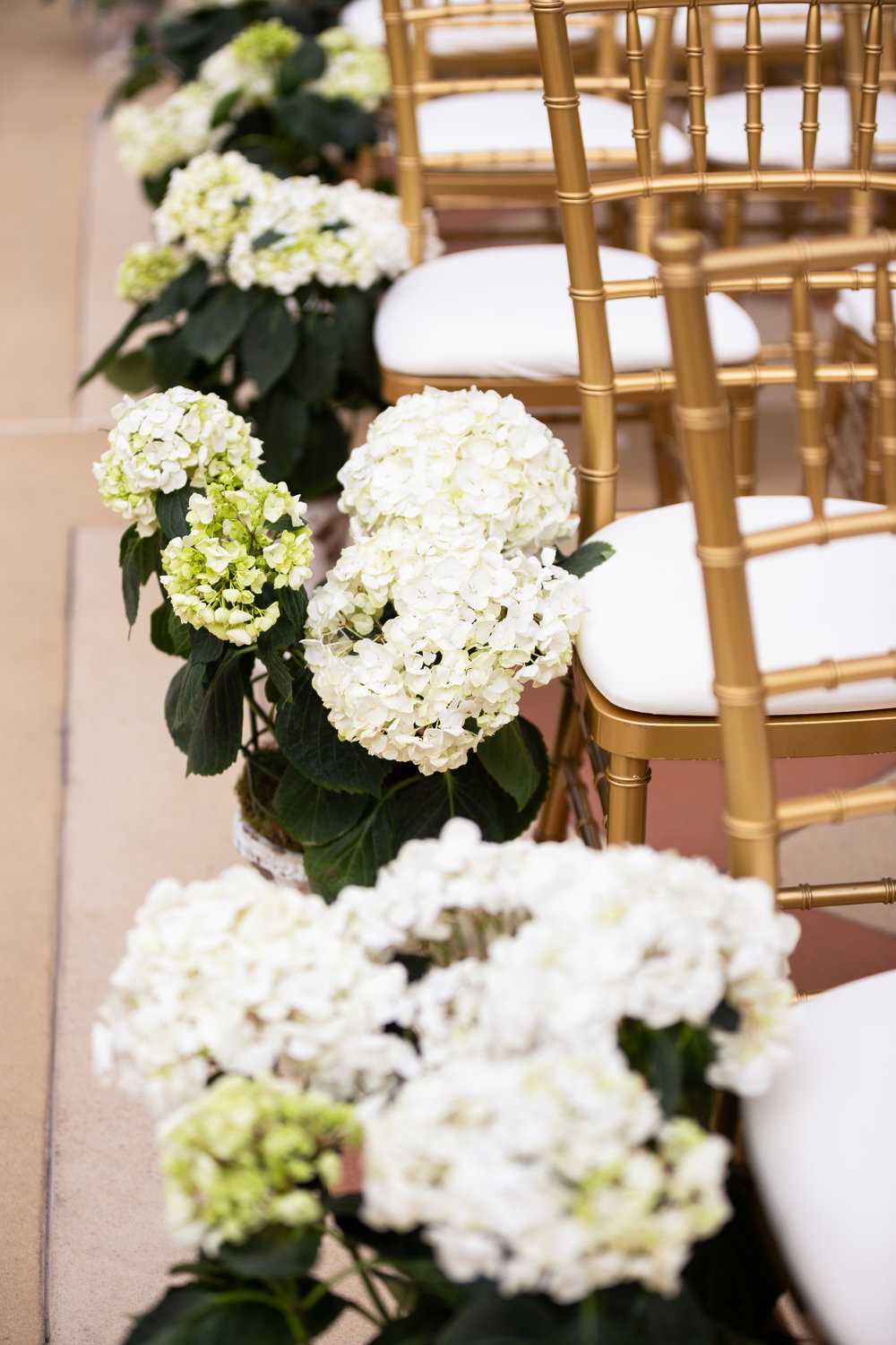 Potted hydrangea on the aisle at a wedding ceremony.  Wedding Planner:  Andrea Eppolito Events   |   Photography  D2 Tuscan Wedding Photography   |  Videography  M Place Productions   |  Venue & Catering:  Bellagio   |  Floral & Decor:  Destinations by Design    |  Lighting:  LED Unplugged   |  Music: Classical Entertainment &  DJ Mike Fox   |  Hair & Make Up:  Amelia C & Co