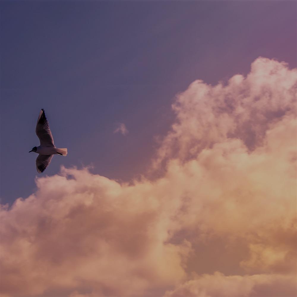 Evening Meditation -