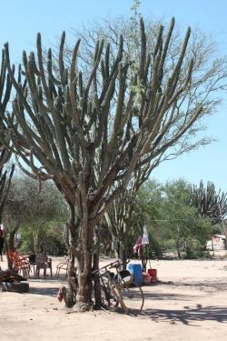 San Lazaro's Originial Location