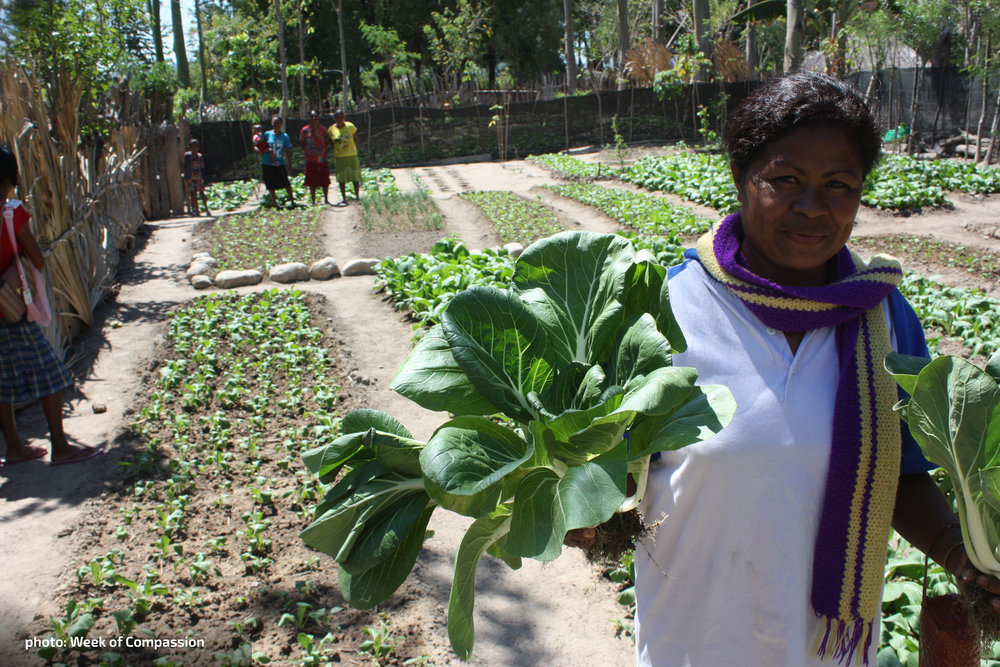 The produce from this  women-led community  garden provides food  and cash for a local  nutrition clinic.  [photo:  Week of Compassion]
