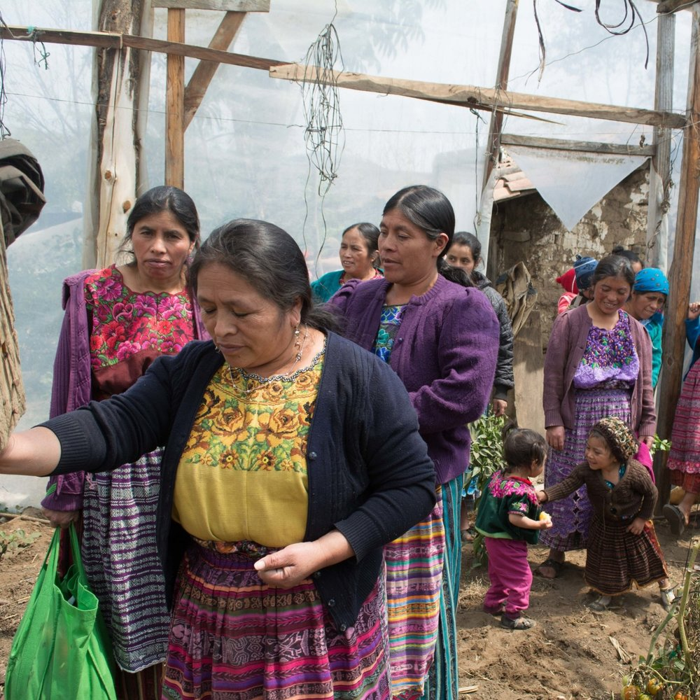 Photo credit: Foods Resource Bank   A women's co-op in Guatemala uses greenhouses to grow produce to eat and sell; the co-op also provides an organization for promoting education, healthcare, and rights for women and idigenous communities.