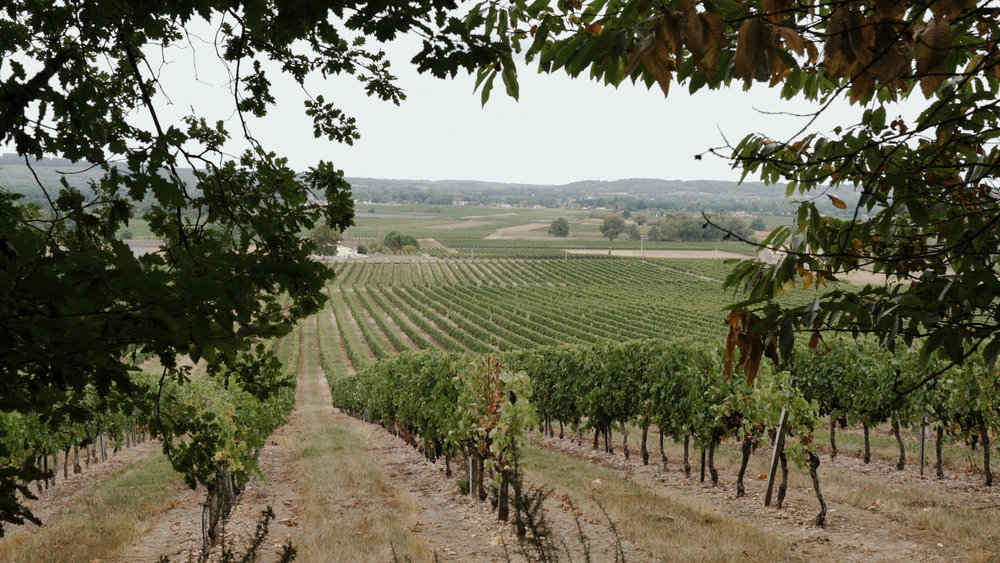 Vineyards near the Chateau Rigaud, France