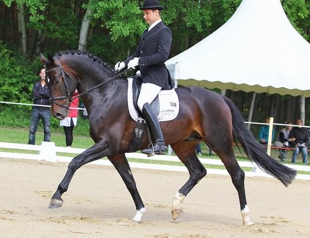 Primeras morbror San Primero e. San Amour. Vann här sin kvaltävling till Bundeschampionatet i Warendorf för 5-åriga hästar 2013, detta var hans andra tävlingsstart i livet. Sin första start gjorde han i slutet av Maj 2013 i en MSV och där placerade han sig på en fin andraplats.