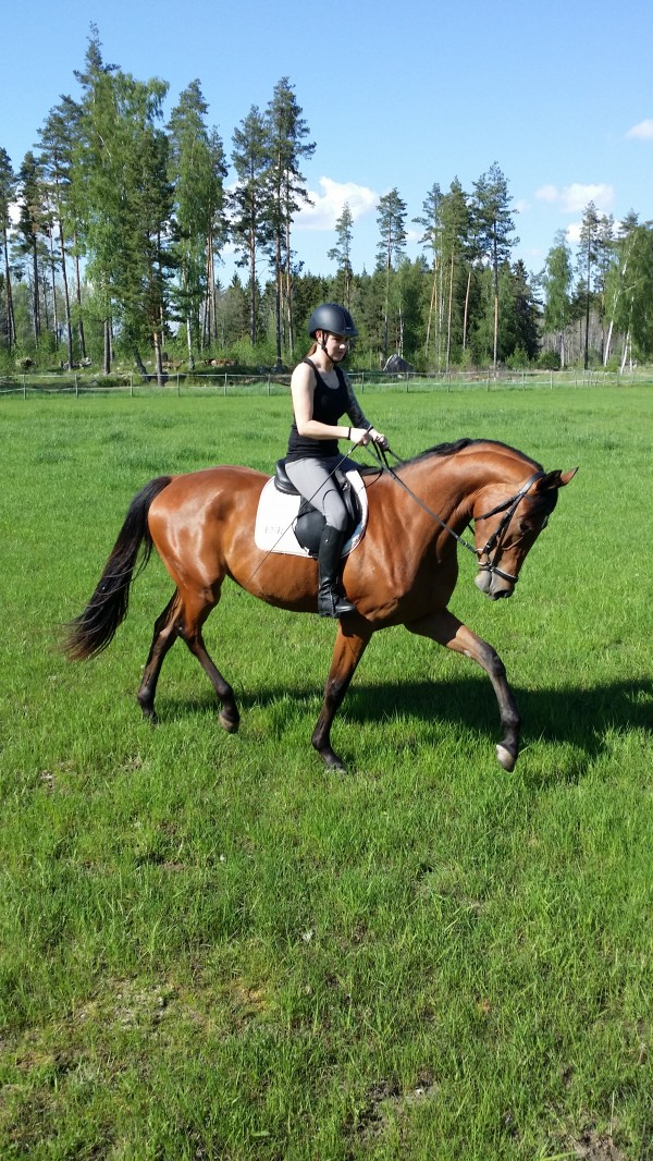 "Celissa "" Aliss "" 2014 med Sannas hästskötare."