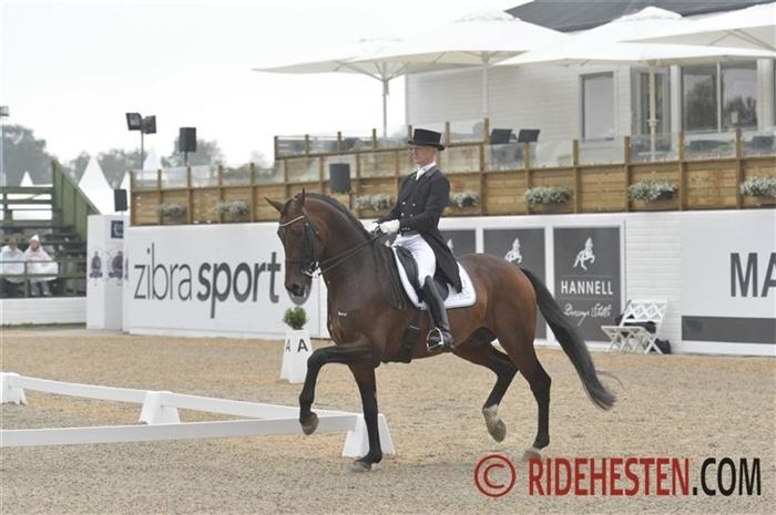 Foto: Ridehesten.com