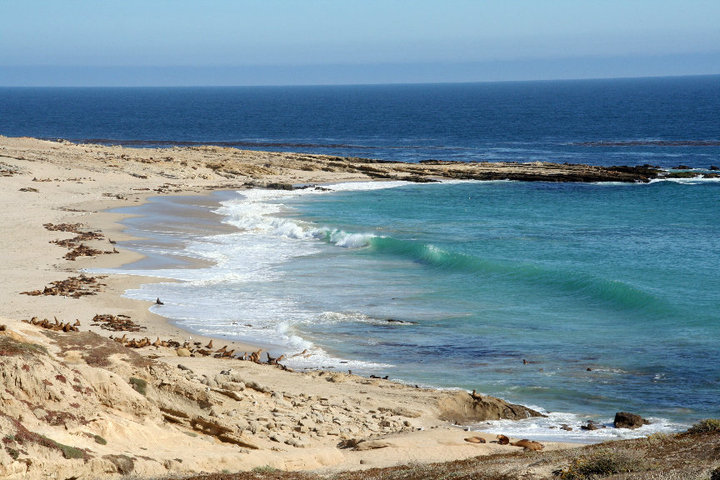 San Nicolas Island sea lion Colony