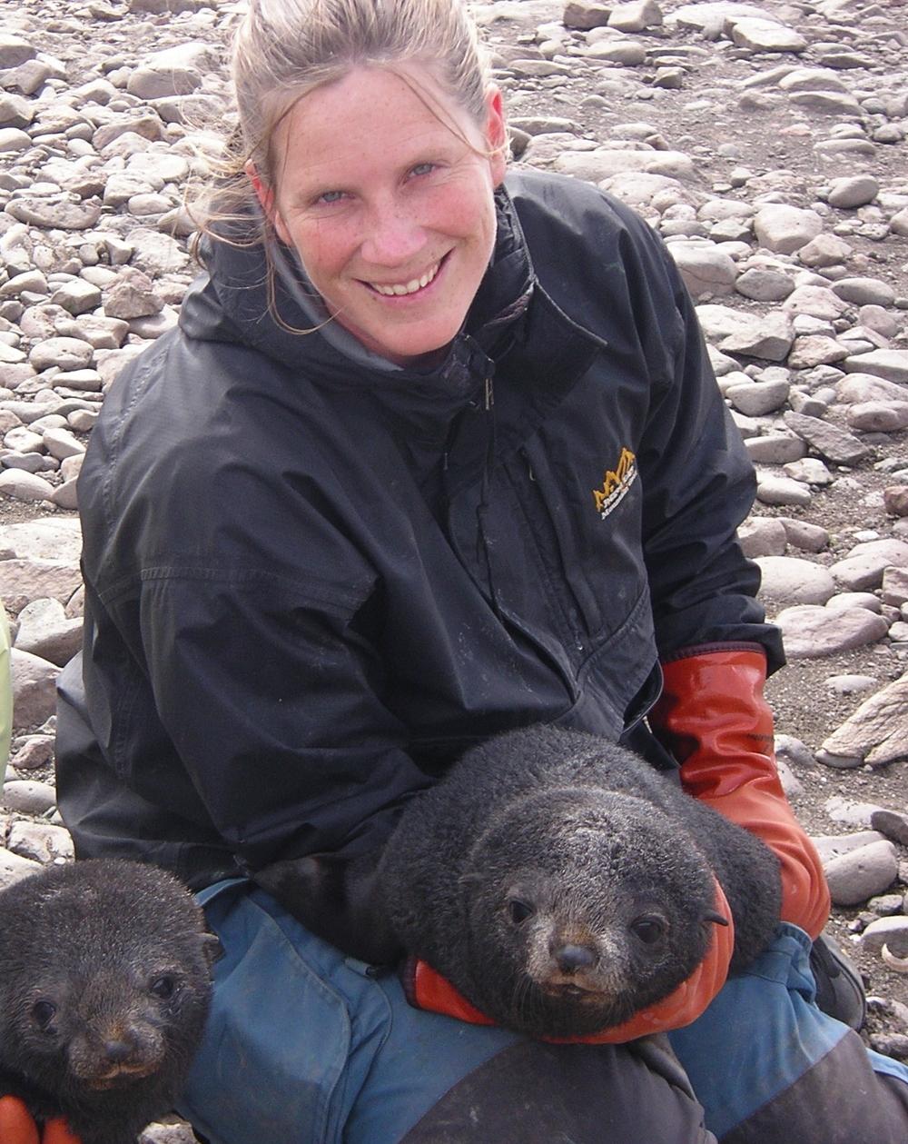 BirgitteMcDonald_Antarcticfurseal.jpeg