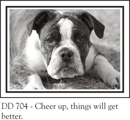 DD_704__bulldog_pup_130.jpg