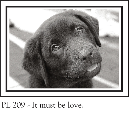 PL_209chocolate_lab_love_72.jpg