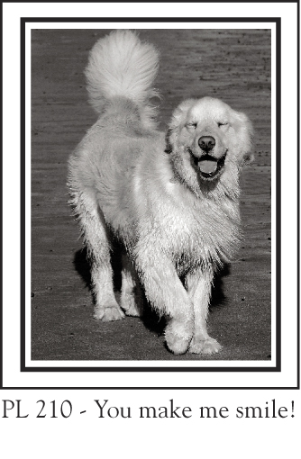 PL_210__golden_retriever_smile_71.jpg