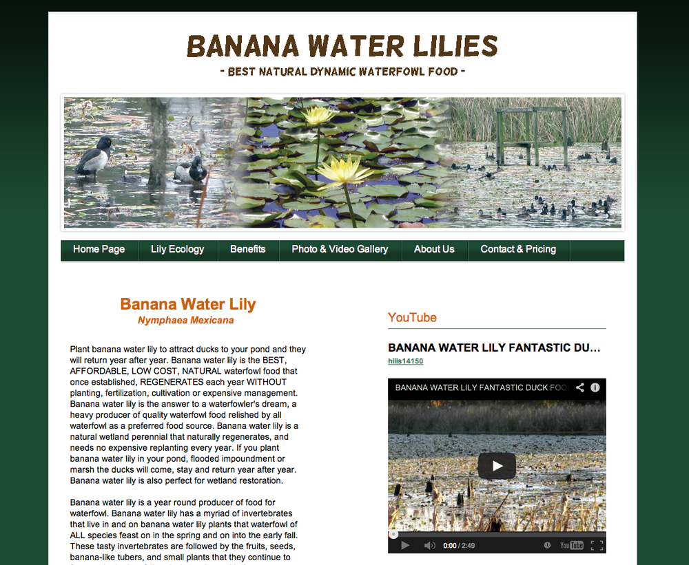 Banana Water Lilies