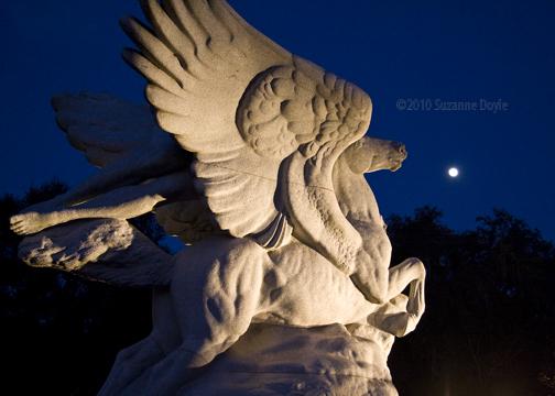 Pegasus 2-72©.jpg