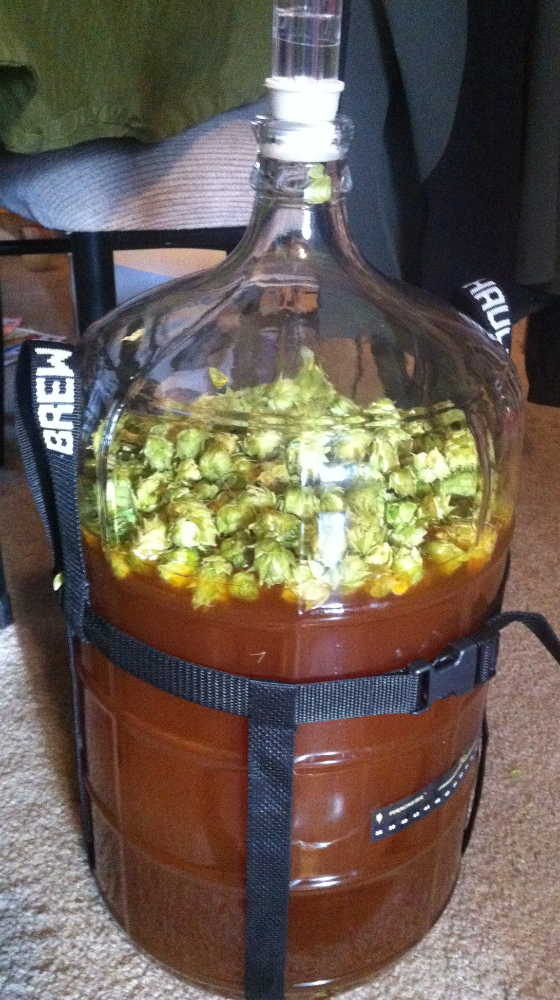 Dry-hopping my homegrown hops.