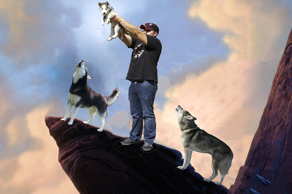 Photo illustration of John (a husky lover) having a little fun a la  The Lion King .