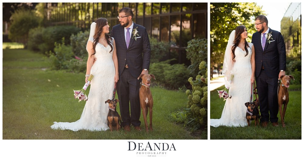married wedding couple with two dogs