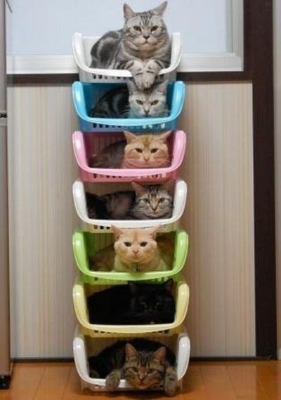 organized cats.jpg