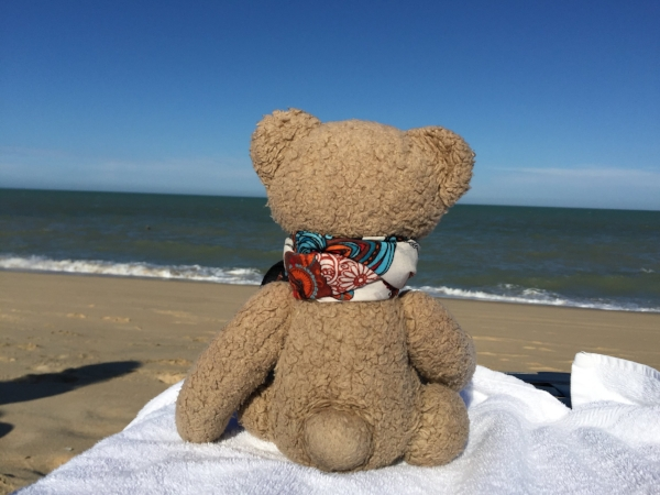Mr. Bear in San Felipe