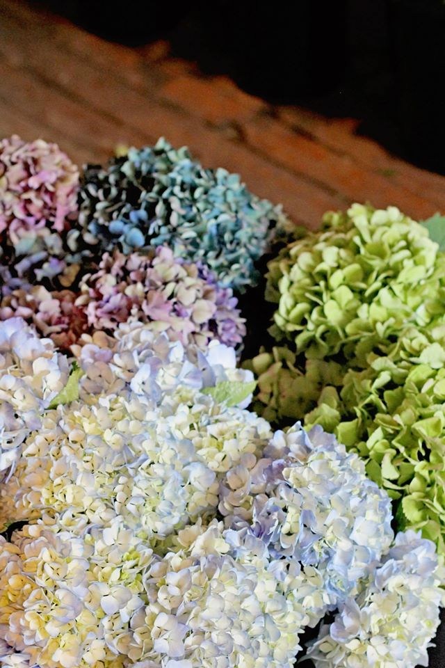 Beautiful hydrangeas in the most beautiful floral shop