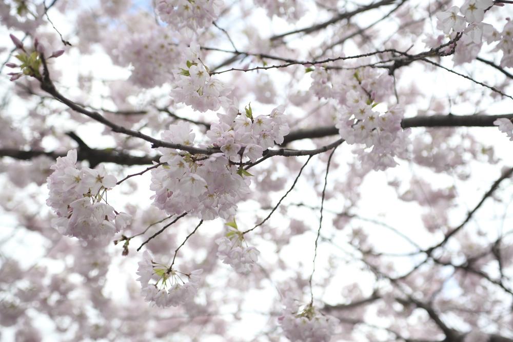 2013-spring-nyc_49.jpg
