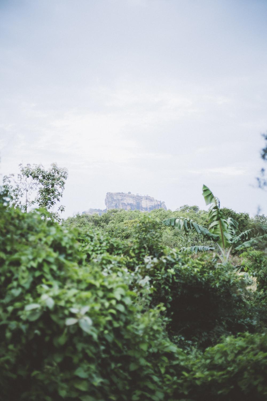 Sri_Lanka-39.jpg