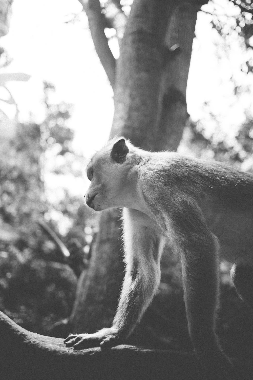 Sri_Lanka-101.jpg