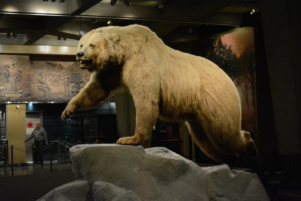 A stuffed bear at the entrance of the museum