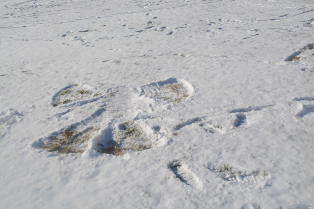 We made some snow angels for people to find from the top.
