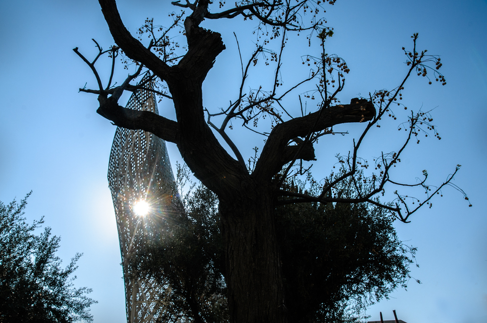 Gehry Peix and Fruiting Tree. Olimpic Port Barcelona, 2012.