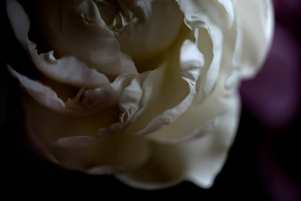peony-gardenia.jpg