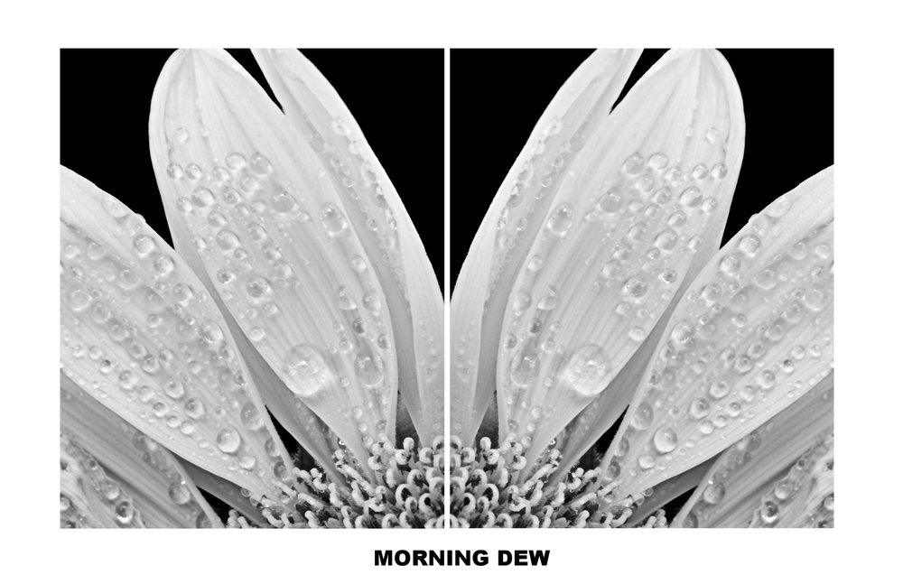 Morning Dew Diptych_32 x 20_on aluminum.jpg