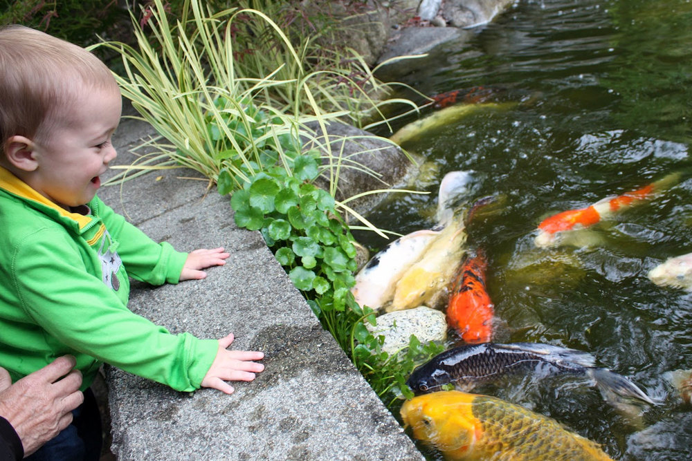 Boy Feeding Koi Fish