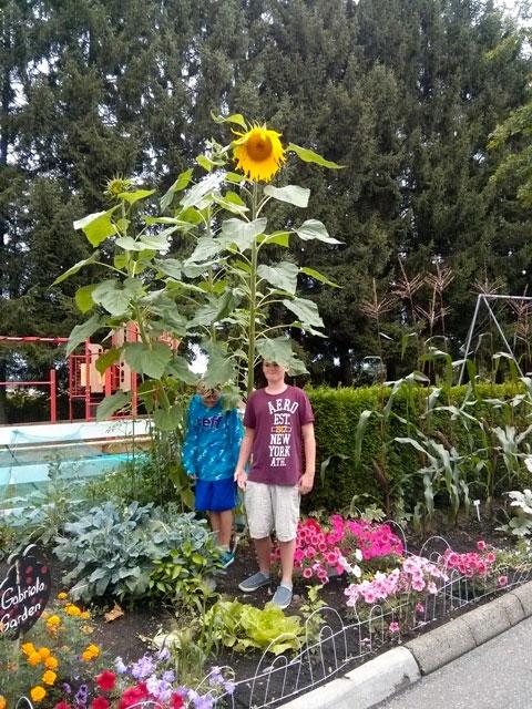 Gabriola Strata Garden