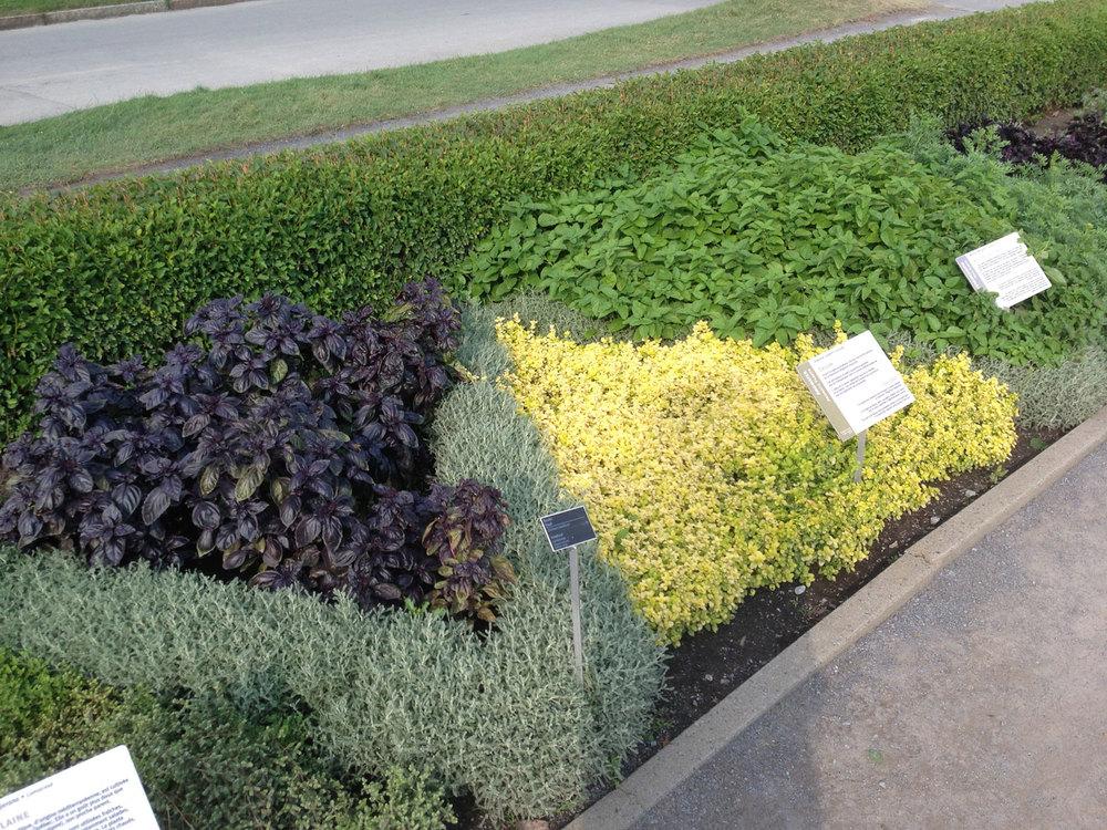 Herb Beds